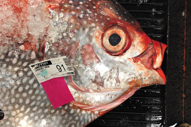mw-feature-012514-fishauction-1