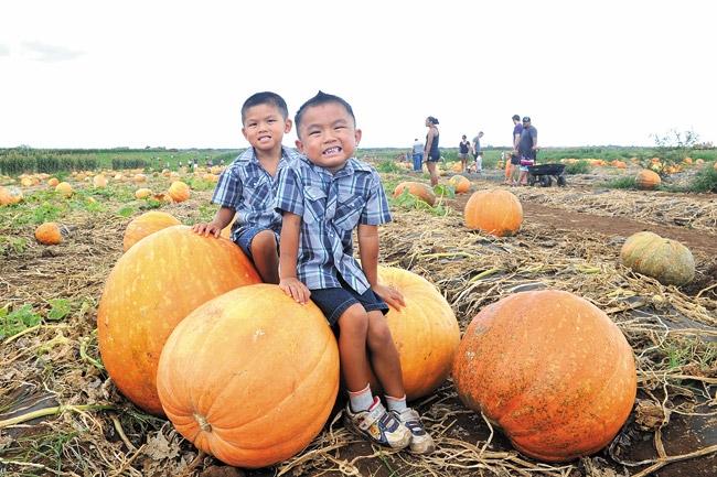 wo-103013-pumpkin-1