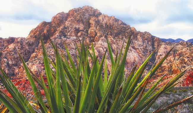 Take a side trip to amazing Red Rock Canyon the next time you go Vegas. Jade Moon photo